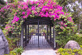 Garden the gate was covered with bougainvillea flowers Stock Photography