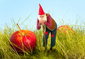 Garden Gnome And Apple