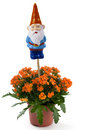 Garden gnome with flowers orange on white background Royalty Free Stock Photos
