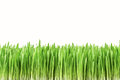 Garden grass isolated on white background nature theme Stock Photos