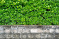 Garden green plants for wall background Royalty Free Stock Photo