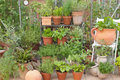 Garden herbs in pots and greenhouse with a background decorations Royalty Free Stock Photography