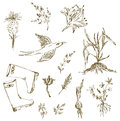 Garden herbs sketch with birds plants gumboots sketches Stock Photos