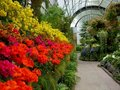 Garden: historic glasshouse flower display - h Royalty Free Stock Photos