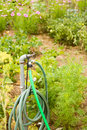 Garden hose growing organic vegetables in community Stock Photo