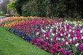 Garden III Royalty Free Stock Photo