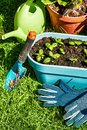 Garden inventory with seedlings basil on green Royalty Free Stock Photo
