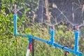 Garden irrigation Royalty Free Stock Photo