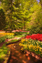 Garden in keukenhof tulip flowers and trees netherlands on background spring europe Stock Image