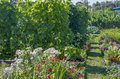 Garden  kitchen garden with flowers and bushes of grapes Royalty Free Stock Photo