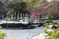 Garden with lake during cherry blossom in yokohama tokyo japan winter snow Royalty Free Stock Photo
