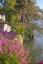 Garden on lake shore Royalty Free Stock Images