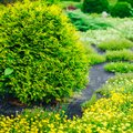 Garden Landscaping Design. Flower Bed, Green Trees Royalty Free Stock Photo