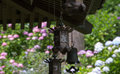 Garden lantern of japanese temple old in summer it is a hydrangea to show behind Royalty Free Stock Photography