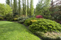 Garden lawn after spring rain a backyard with healthy and plants in time Royalty Free Stock Image