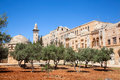 Garden with olives inside of Temple Mount Stock Image