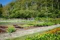 Garden on an organic farm Royalty Free Stock Photo