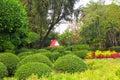 Garden parkland nature plant background Royalty Free Stock Image