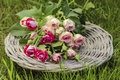 Garden party decor. Bouquet of pink roses on wicker tray Royalty Free Stock Photo