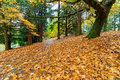 Garden Path Covered in Autumn Leaves Royalty Free Stock Photo