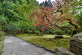 Garden Path with Japanese Maple Trees Royalty Free Stock Photo