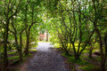 Garden Path in Spring Portland Japanese Garden Oregon Royalty Free Stock Photo