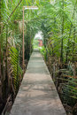 A garden pathway with sun shine Stock Image