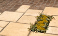 Garden paving detail plant inset Royalty Free Stock Photo