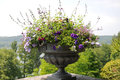 Garden planter with colorful flower arrangement at a balcony on mainau island Stock Photo