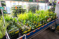 Garden plants for sale in hornbach store romania Stock Image