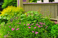 Garden plot a lush bed of yarrow sage and other flowers bordering a veranda Stock Image