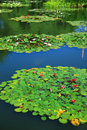Garden pond Stock Photography