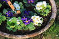 Garden pot Royalty Free Stock Photography