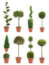 Garden pot plant Royalty Free Stock Images