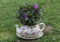 Garden pots kettle with flowers Royalty Free Stock Photography