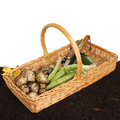 Garden produce in basket Royalty Free Stock Photography