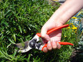 Garden Pruning Stock Images