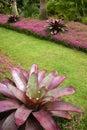 Garden: Purple Subtropical Bro...