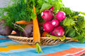Garden radish, carrots and beet. Stock Photo