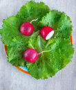 Garden radishes on the leafs lettuce green Stock Photo