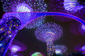 Garden Rhapsody Light Show at Super Tree Grove Royalty Free Stock Photo