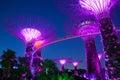 Garden Rhapsody Light Show at Super Tree Grove, Singapore Royalty Free Stock Photo