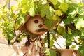 Garden scarecrow Royalty Free Stock Photo
