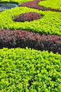 Garden shrubs the pattern of Royalty Free Stock Photos
