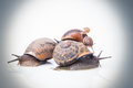 Garden snails on top of each other color processed may sugest family values Stock Photos