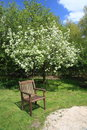 Garden in the spring empty chair a sunny blossomed apple tree background Royalty Free Stock Photography