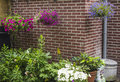 Garden in spring hanging baskets on a wall a Royalty Free Stock Photo