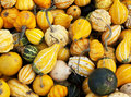 Garden squashes background Royalty Free Stock Photography