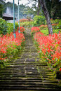 Garden stairs with flowers Stock Image