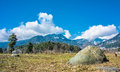 Garden stone and sky dry tree in a in pahalgam seen in march end of year Royalty Free Stock Image